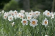 flowers-188